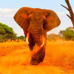 Trois parcs exceptionnels à visiter dans la partie septentrionale de la Tanzanie