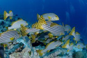 plongee sous marine