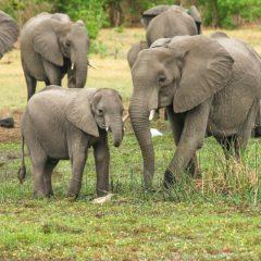 L'Afrique du Sud, une charmante destination qui vaut le détour