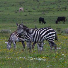 La Tanzanie, une destination safari immanquable en Afrique continentale