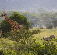 Kenya : une destination qui tient ses promesses