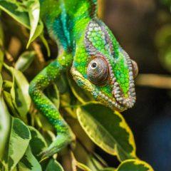 Choisir Madagascar pour un premier voyage solidaire